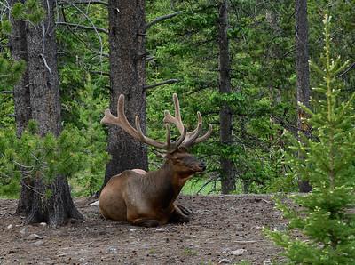 Elk were abundant.