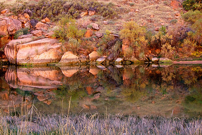 Phyllis was amazed at the impressionistic nature of these trees, stones and fall colors reflecting in a still pool along the Colorado River in Marble Canyon.  First in a series.