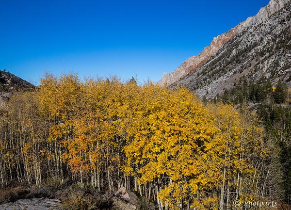 """""""Bishop Pass Fall"""""""
