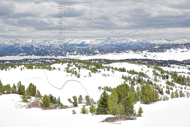 Beartooth Pass Spring Scenery, <br /> Near Yellowstone National Park, Wyoming<br /> Wyoming, USA