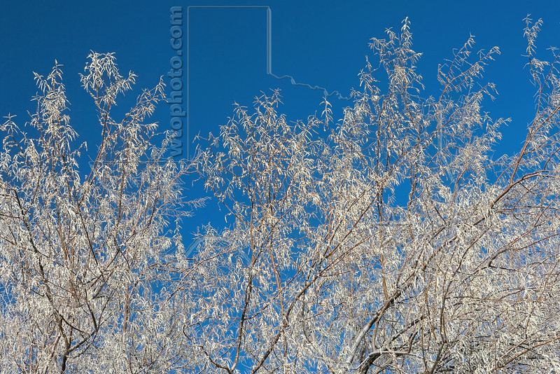 Tree and Blue Sky, Harris Wash<br /> Grand Staircase Escalante National Monument,<br /> near Escalante, Utah