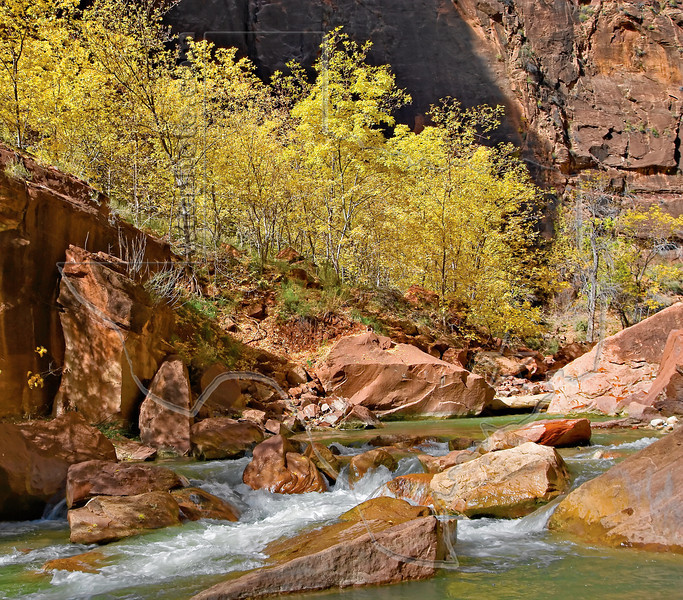 Fall Cottonwoods by Virgin River,<br /> Zion National Park, Utah