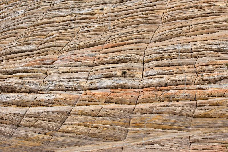 Checkerboard Mesa, Closeup,<br /> Zion National Park, Utah