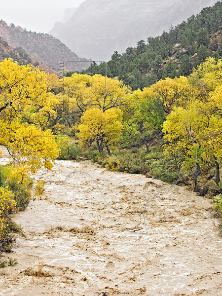 Rain-swollen Virgin River,<br /> Zion National Park, Utah
