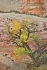 Wet Sculpted Sandstone,<br /> Zion National Park, Utah