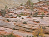 Wet Sculpted Sandstone,<br /> Zion National Park, Utah