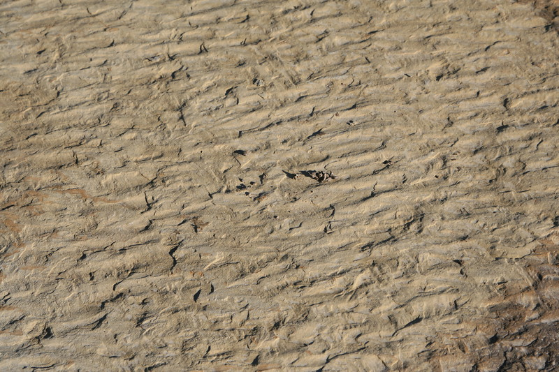 Sandstone rock with water ripples etched in stone