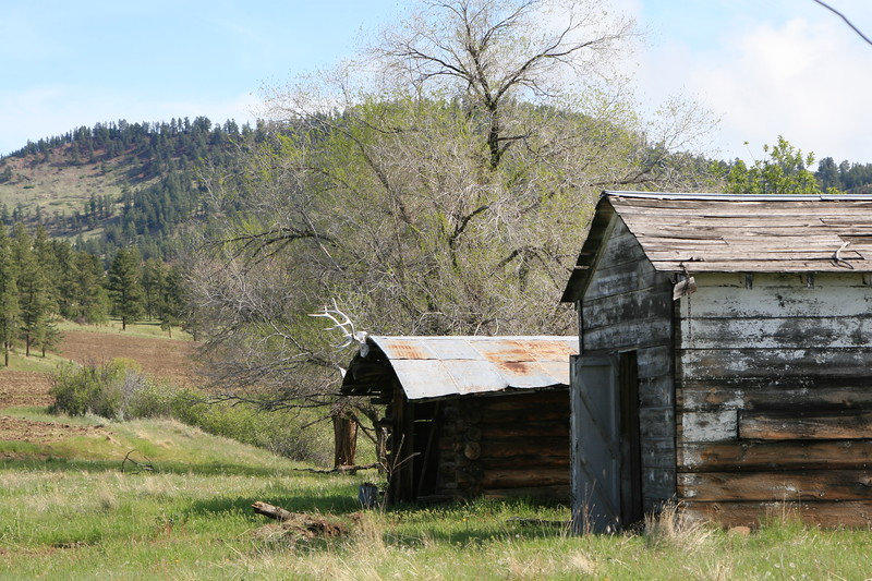 Old horseshoer's log cabin, or carpenter's hut, with tin roof, elk head and another building in the foreground