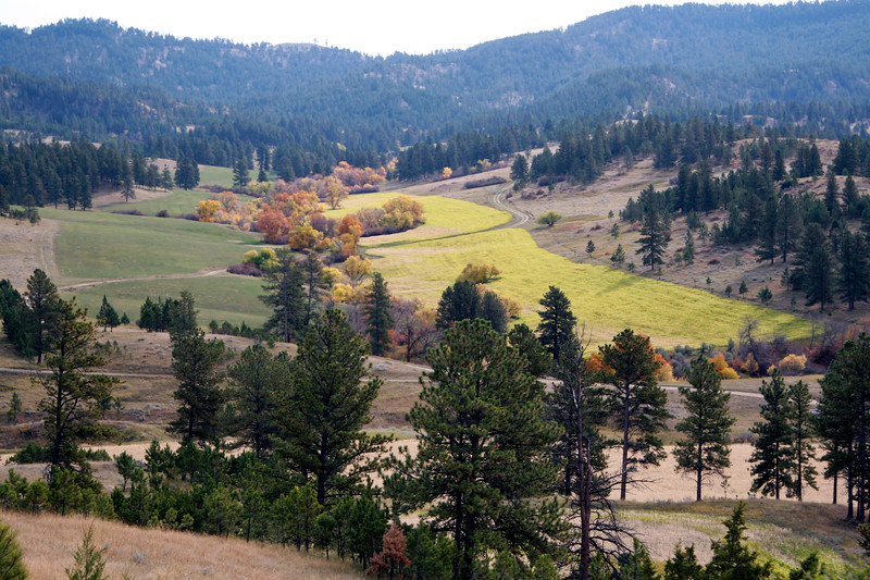 Fall view of planted green valley