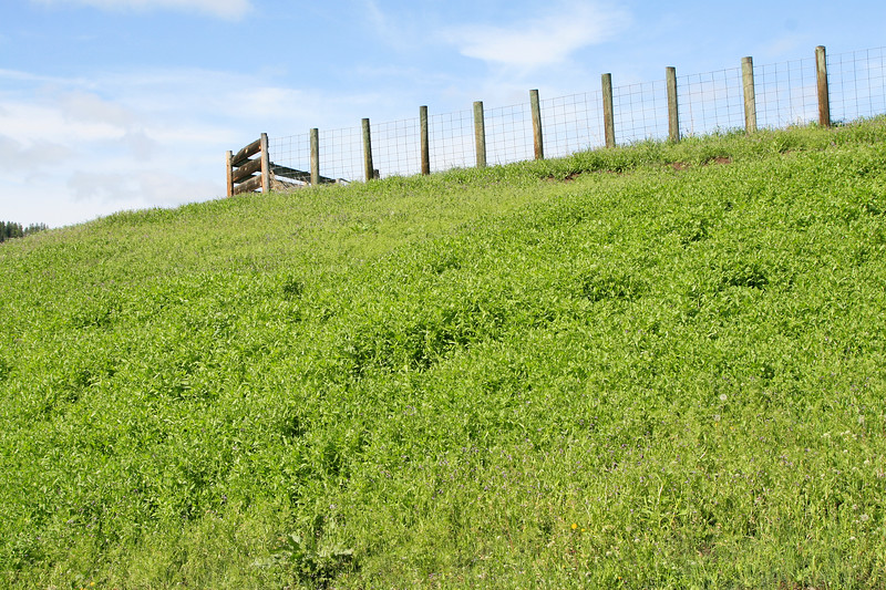 Fence on top of the hill