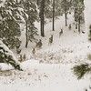 Mule deer on snowy mountain