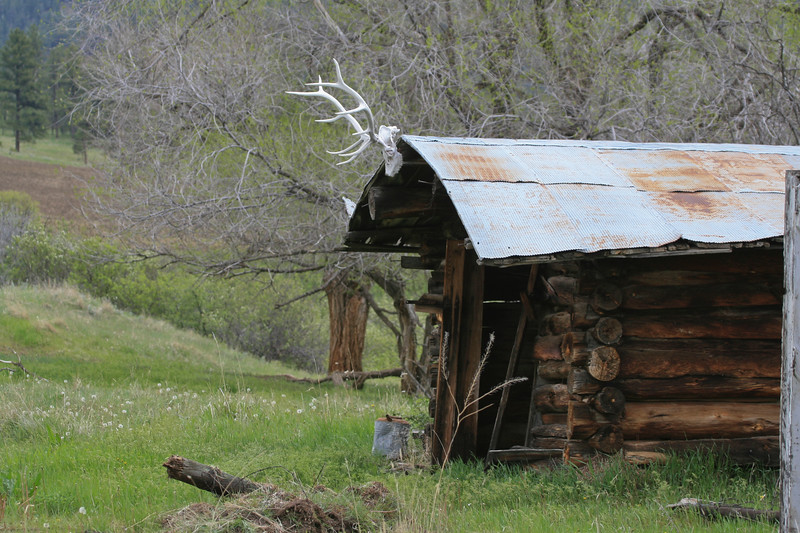 Old horseshoer's log cabin, or carpenter's hut, with tin roof and elk head