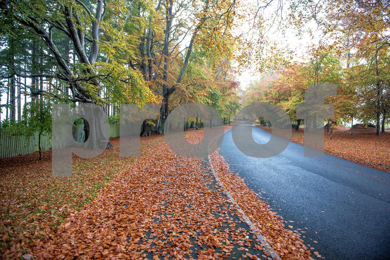 Autumn Colour 2015