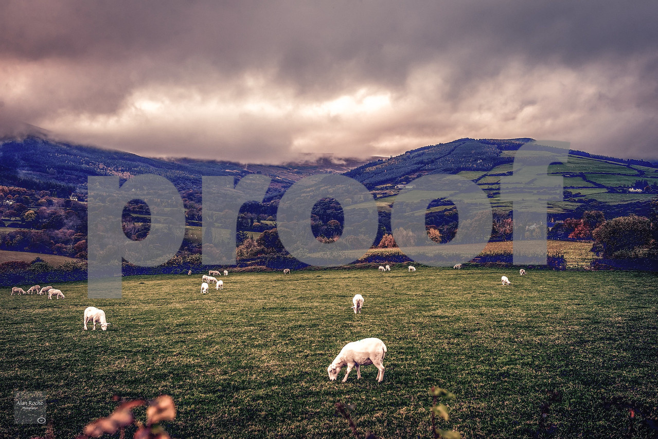 Autumn on The Wicklow Mountains