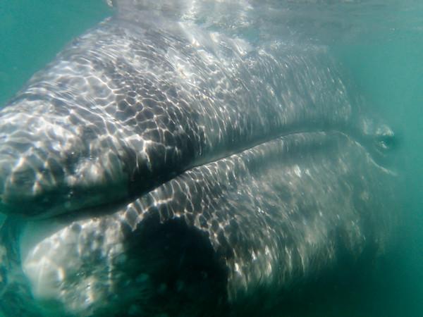 Whales and desert; Baja 2015