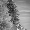 Rocks and Pine tree covered in Hoar Frost