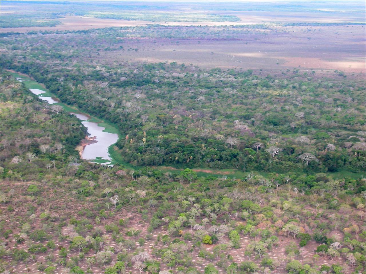 View from a small Cessna flying over the Beni region of northern Bolivia, a mixture of wilderness and cattle ranches. The white spots on the ground in the foreground are termite mounds.