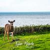 408  G Deer