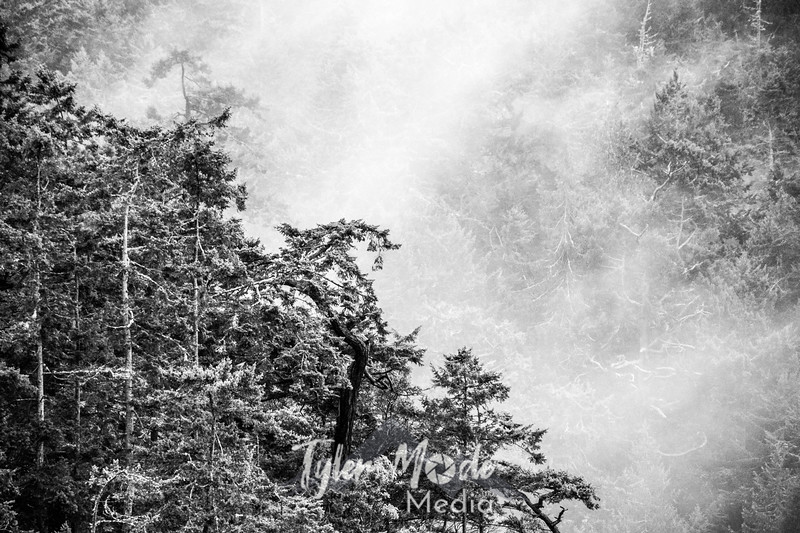 163  G Misty Trees BW