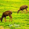 419  G Deer