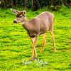 412  G Frozen Deer