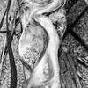 109  G Twisted Wood Close BW V