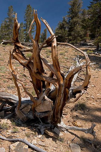 Rock Wood