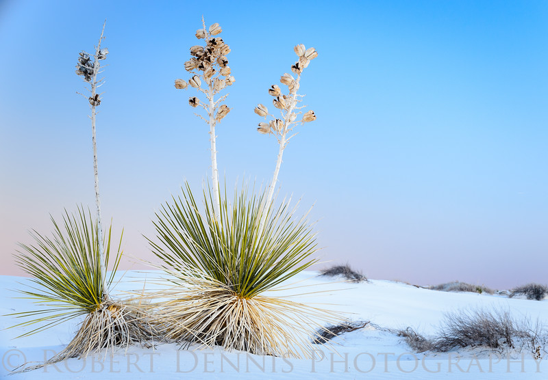 RDennis - Visionary White Sands-011613-3067