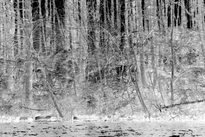 20120318. Negative of shoreline on Whitehall Reservoir, Hopkinton MA.