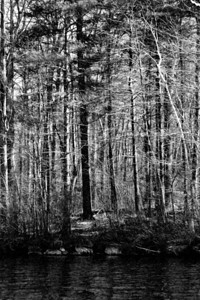 20120318.  Sunlight filtering through forest adjacent to Whitehall Reservoir, Hopkinton MA.