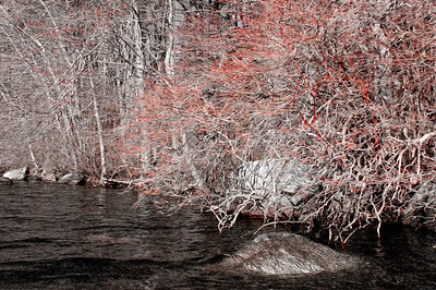 20120318.  Shoreline on Whitehall Reservoir, Hopkinton MA.