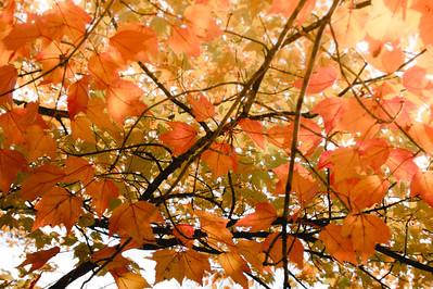 Whitnall Park Fall