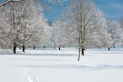 Whitnall Park Snow