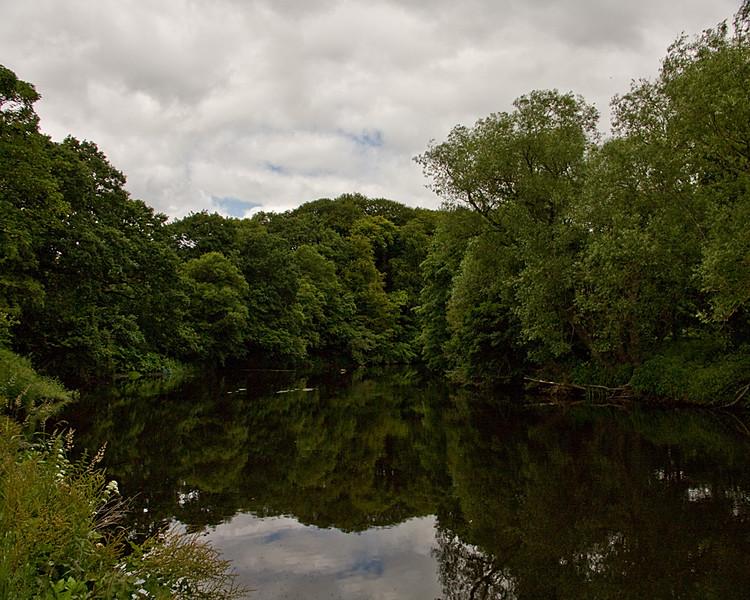 Low Burnhall Woods, Durham