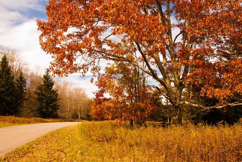 Near Cranberry Glades in West Virginia