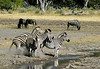 Zebra and wildebeest at waterhole