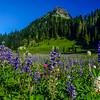 Tipsoo Lake Reflection Mt Rainier-Tony Porter Photography-447
