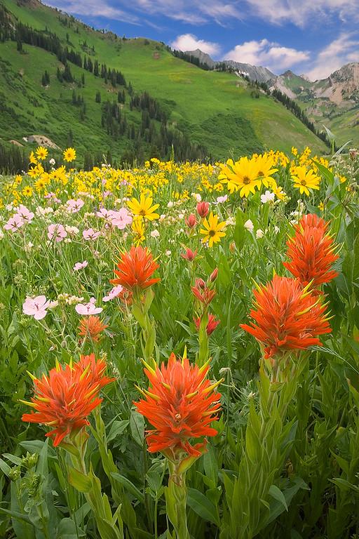 Wildflower Celebration