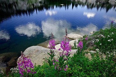 flo12: another view of fireweed and asters with clouds reflecting in Lake Mary, by Phyllis