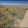 Road with Colorful Blooming Wildflowers, Antelope Valley, California