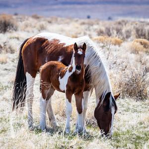 wlc Mustangs  03222020192020
