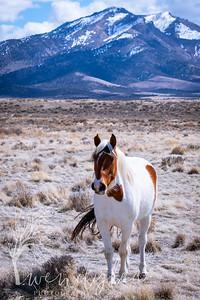 wlc Mustangs  03222020692020