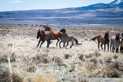 wlc Mustangs  032220202532020