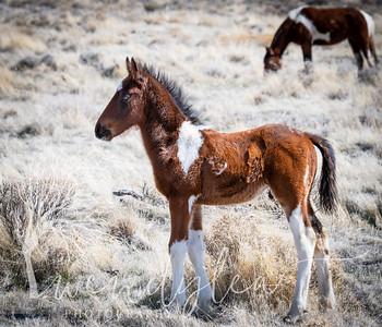 wlc Mustangs  03222020642020