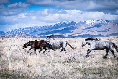 wlc Mustangs  032220201702020