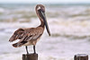 More Than His Belly Can<br /> <br /> A wonderful bird is the Pelican.<br /> His beak can hold more than his belly can.<br /> He can hold in his beak<br /> Enough food for a week!<br /> But I'll be darned if I know how the hellican?<br /> by Edward Lear<br /> Corpus Christie, Texas, USA