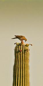 Bird On Blooms