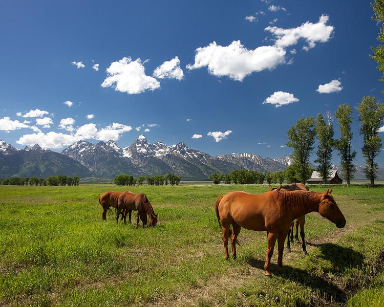 Moulton Barn Horses