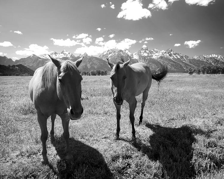 Happy Day Horses