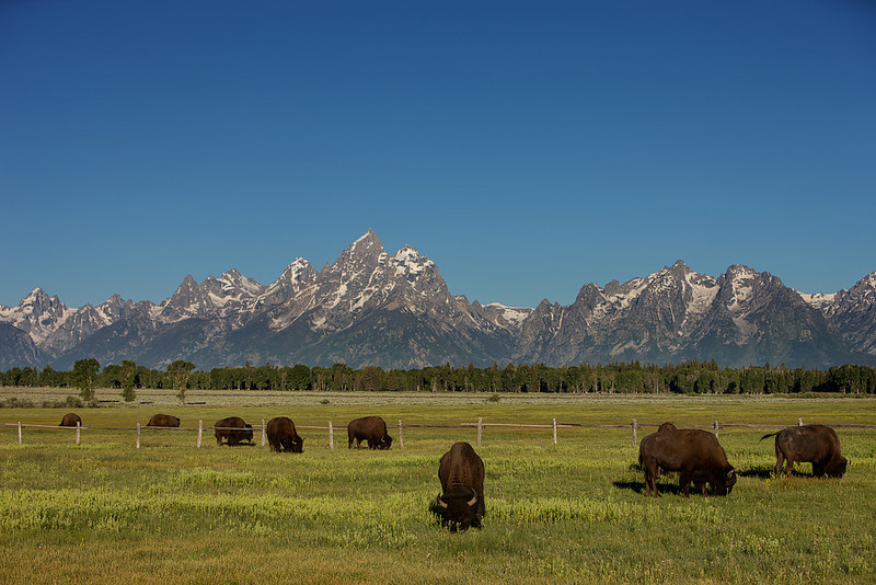 Roaming the Tetons